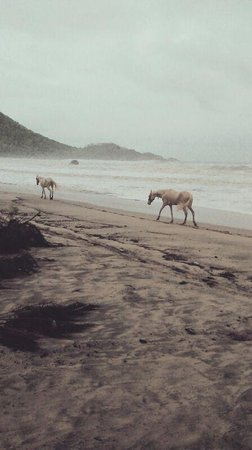 Horses at Agonda beach Goa