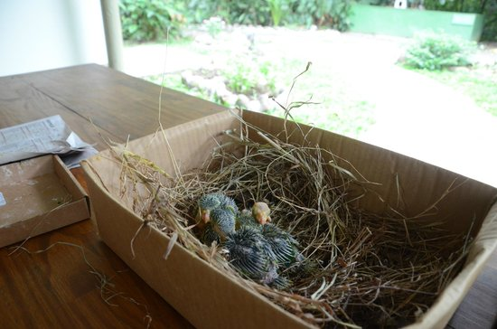 Proyecto Asis: Baby Parakeets