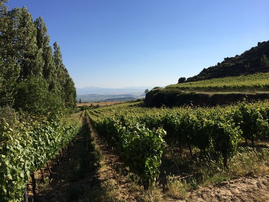 Hospederia del Vino : One of many stunning views to see here.