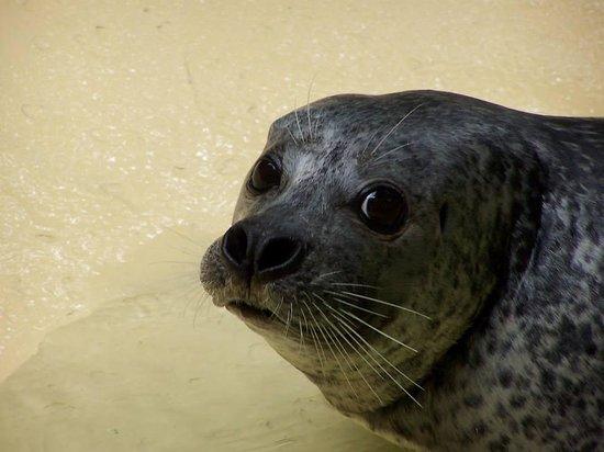 Zoo Duisburg : Zeehond