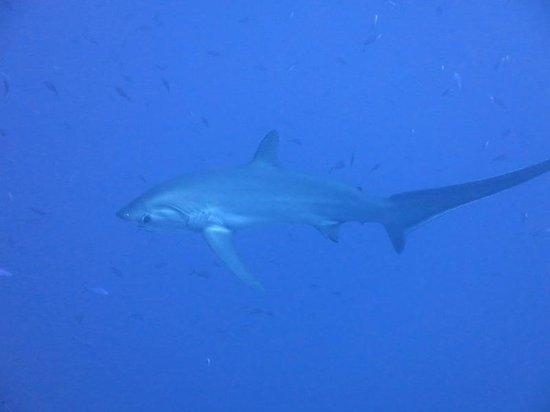 Diving Ocean Makadi Bay: Volpe