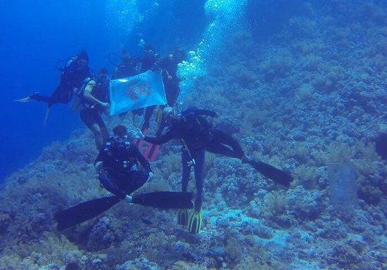 Diving Ocean Makadi Bay: Giò Dive underwater