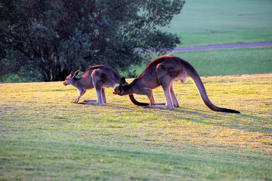 Chateau Elan Hunter Valley : The local wildlife