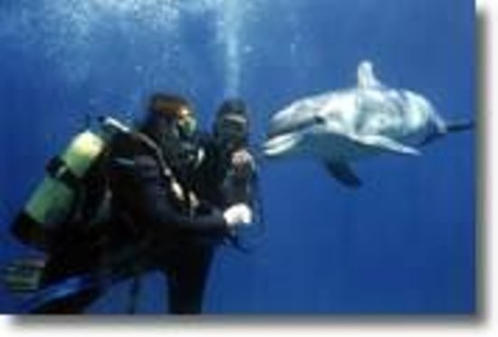 Blue Hotel : dive with dolphines