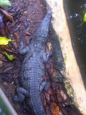 Falconry of Kenya : Крокодильчик