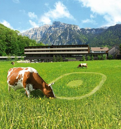 Sonne Lifestyle Resort : Nachbar's Kuh frißt unser Logo