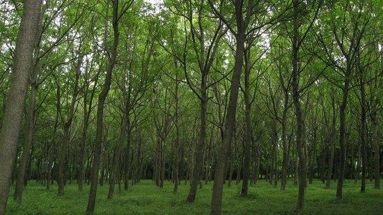 Schio, İtalya: Il bosco di noci da seme