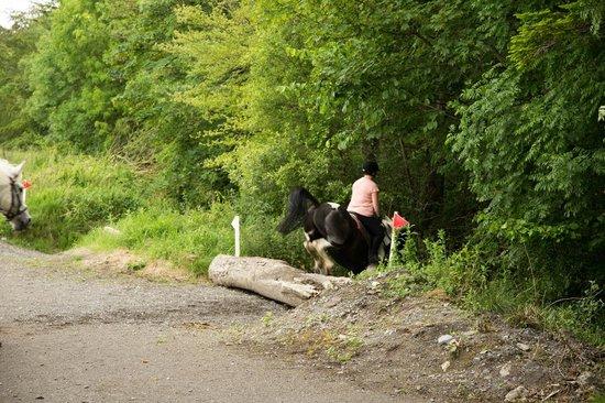 Cross Country ό Flowerhill Equestrian Centre