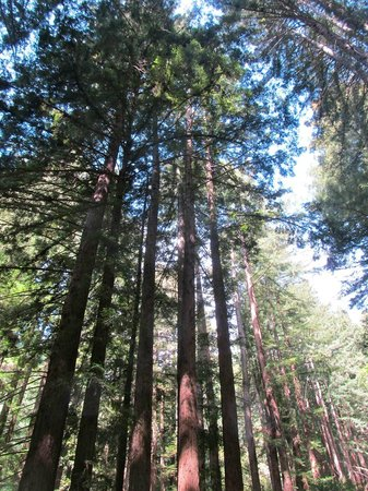 Woodside, Californie : Another circle of trees