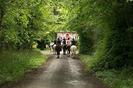 Flowerhill Equestrian Centre Ballinasloe 2020 All You
