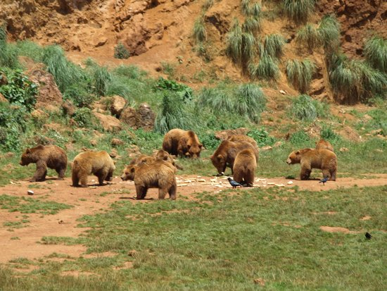 Cabarceno Nature Park: Osos
