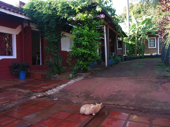 Hotel Iguazu Royal : hotel with a cat