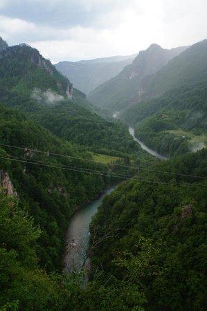 Tara Bridge : Мост Джурджевича