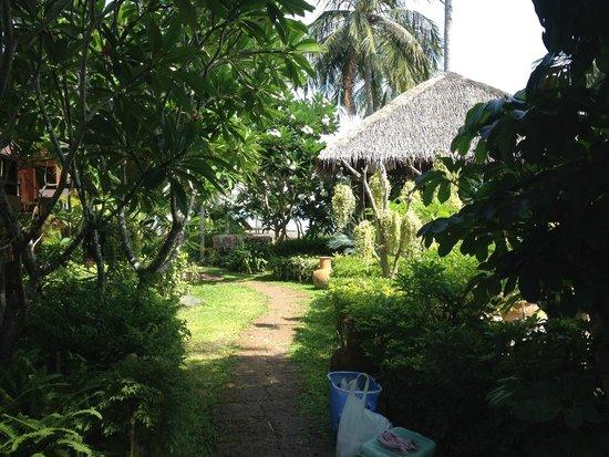 Green Papaya Resort : terrain