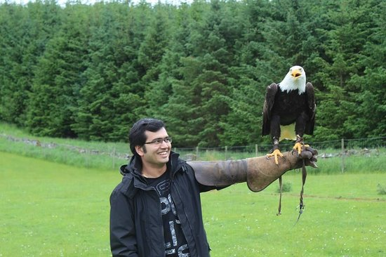 very friendly and safe birds the North East Falconry Centre ..