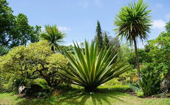 Casa Velha do Palheiro : The neighbouring Palheiro Gardens