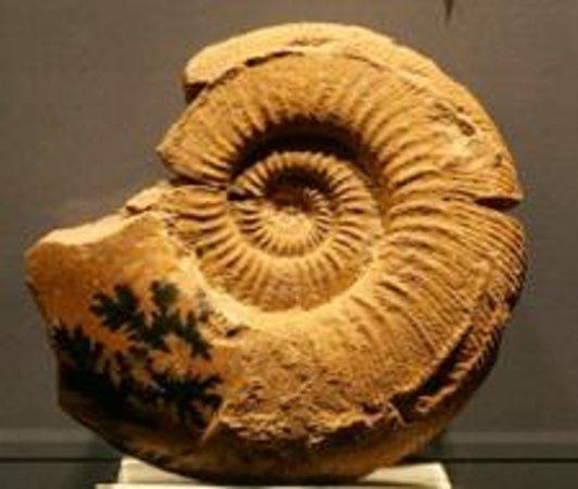 Museo Geologico e Paleontologico G.G. Gemmellaro