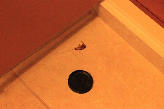 Creta Royal Hotel: Käfer im Zimmer