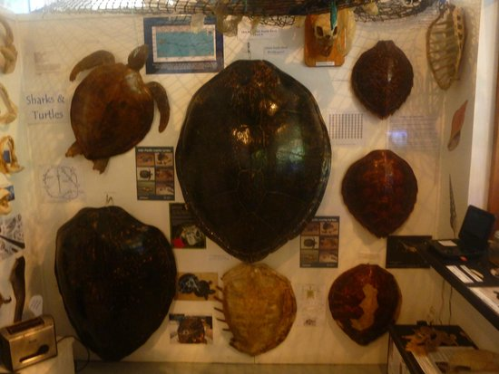 Cook Islands Whale and Wildlife Centre: one of the many dispays
