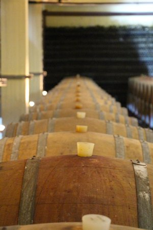 Santorini Wine Tour : wine cellar