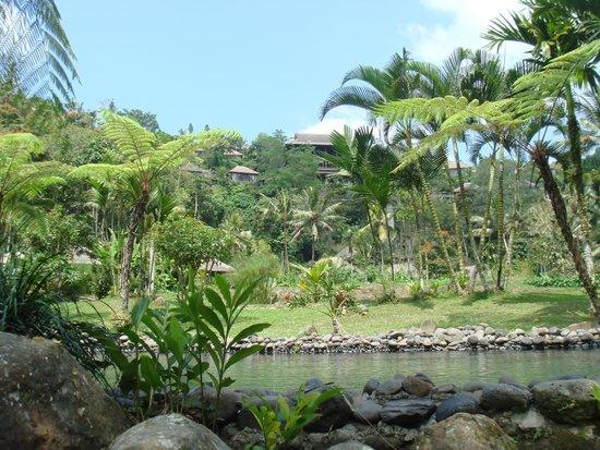 Ubud - The Royal Pita Maha