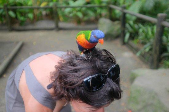 Jardin Botanique de Deshaies : balade sur une tête !