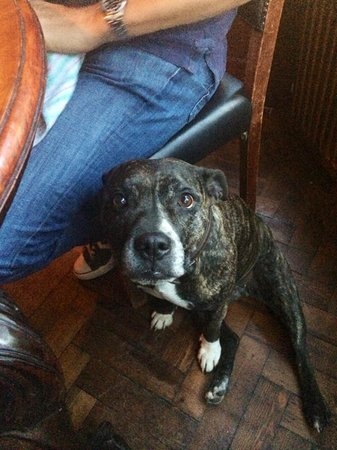 The White Hart: Treacle the dog!