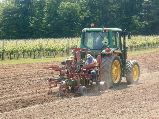 Thirty Bench Wine Makers: Vine Planting