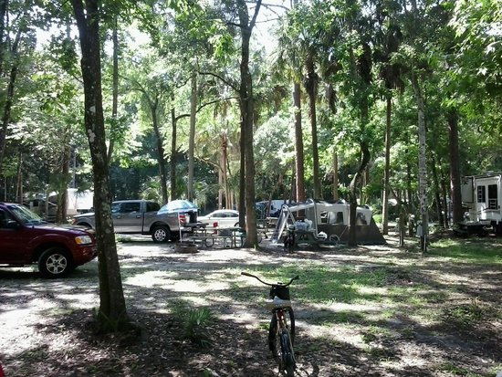 camp sites - Picture of Chassahowitzka River Campground ...