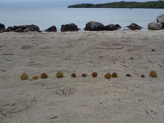 Blackfin Resort and Marina: Look at that water!