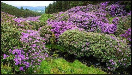 Knockmealdown Mountains : The Vee.