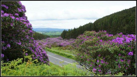 Knockmealdown Mountains: Immer zwischen Ende Mai und Anfang Juni.