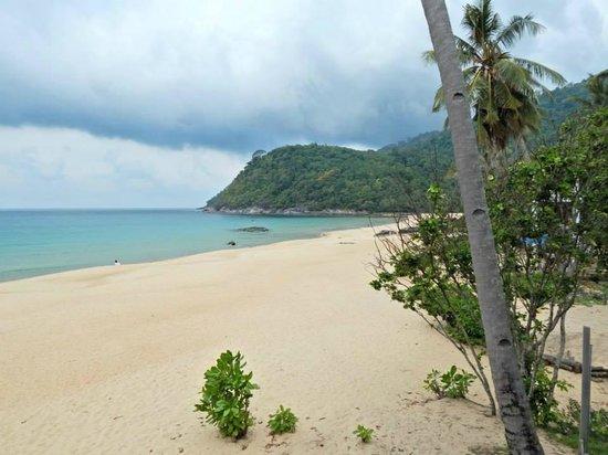 1511 Coconut Grove: Beach