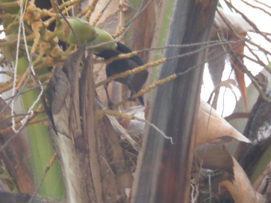 Grand Bahia Principe Tulum: A mãe a dar comida