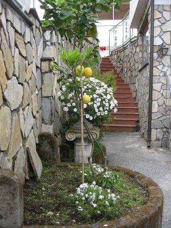 Il Nido Hotel Sorrento: Entrada do hotel