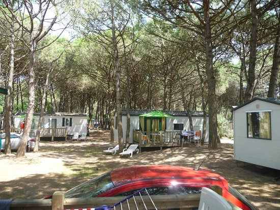 Camping Ca' Savio: Views