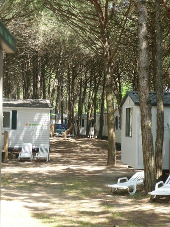Camping Ca' Savio: Beautiful wooded site