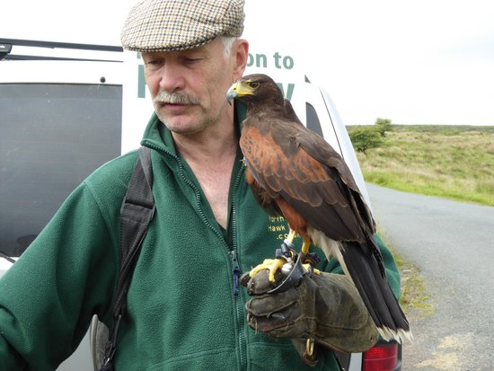 North Devon Hawk Walks: Nigel and Cassius