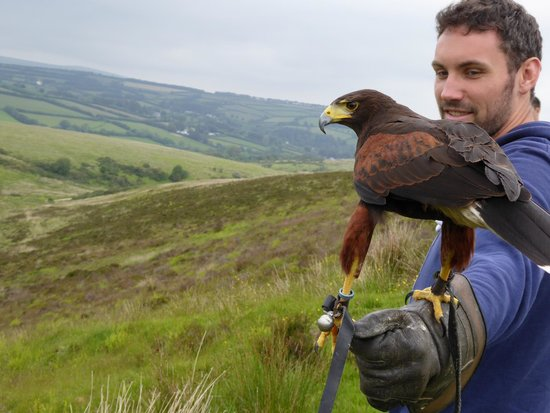 North Devon Hawk Walks: North Exmoor Hawk Walk