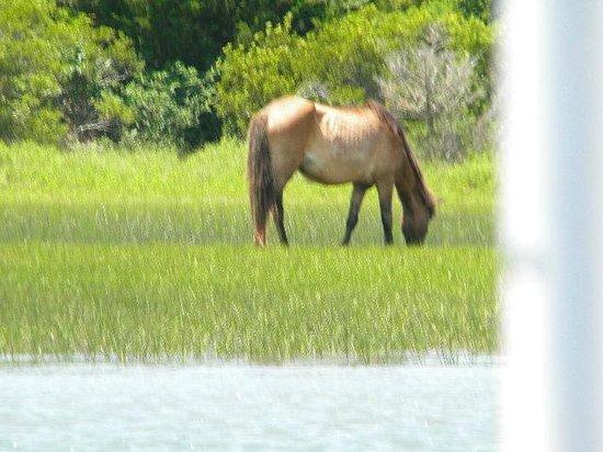 Waterbug Tours: Wild horses