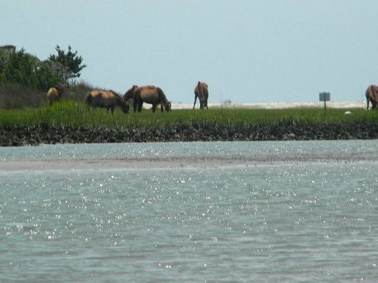 Waterbug Tours: on the inlet
