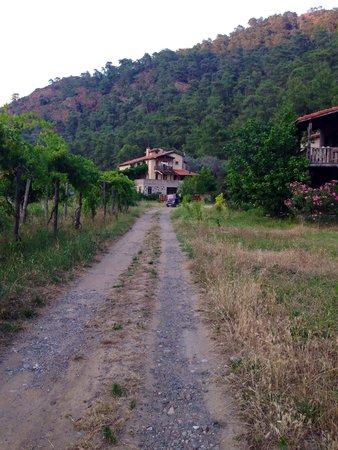 Pastoral Vadi Ecologic Life Farm: Территория отеля