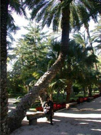 Parque de Elche : palmentuin2