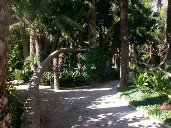 Parque de Elche: Palmentuin