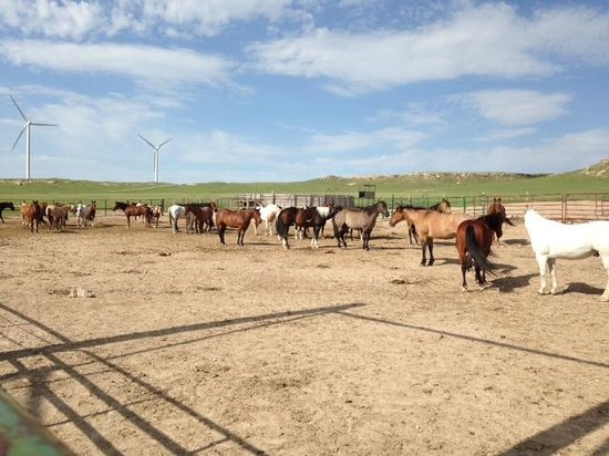 Colorado Cattle Company : Great horses!