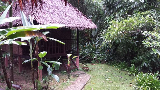 Our Jungle House : riverside bungalow