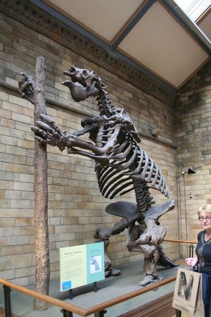 Natural History Museum: Even more skeletons...