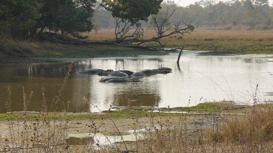 Luwi Bush Camp - Norman Carr Safaris : Luwi River (South Luangwa)