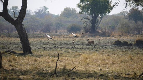 Luwi Bush Camp - Norman Carr Safaris : South Luangwa