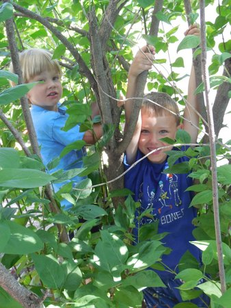 LaSalle Fort Wayne Downtown Inn : My grandsons playing in the lilac bushes at La Salle!